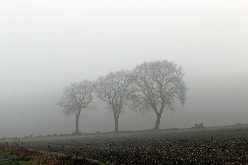 fog autumn nature