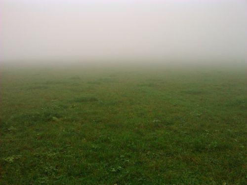 fog meadow autumn