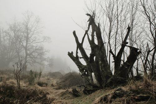 fog root tree root