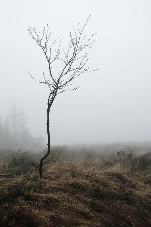 fog root autumn