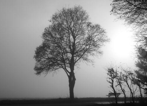 fog tree mood