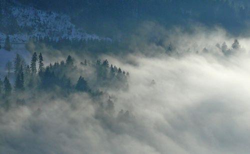 fog nature firs