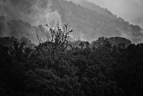 fog mountains vultures