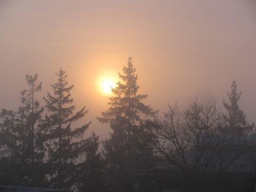fog sunset pines