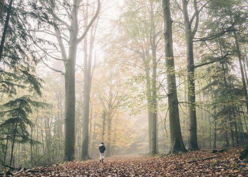 rūkas,miškas,gamta,rūkas,kraštovaizdis,miško peizažas,ruduo,miškai,miško medžiai,lauke,takas,medžiai,vaizdingas,kritimas,peizažas,parkas,gamtos kraštovaizdis,grazus krastovaizdis,lapija