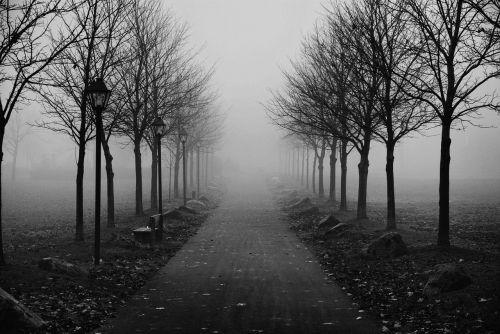 foggy sidewalk morning fog