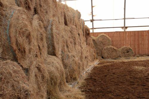 šienas, šiaudai, stabilus, viduje, daug, daug, arklys, krūva, eilutė, dirvožemis, purvas, tvora, suvynioti, supakuotas & nbsp, suvynioti, Roll, gyvūnas, šienas