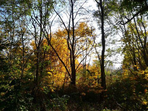 foliage autumn autumn gold