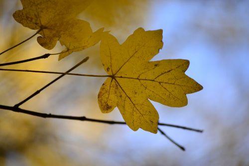 foliage color autumn