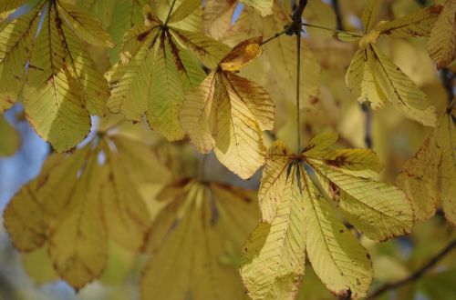 foliage autumn yellow