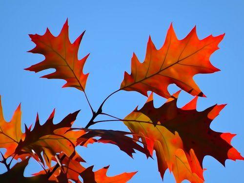 foliage autumn the decrease in