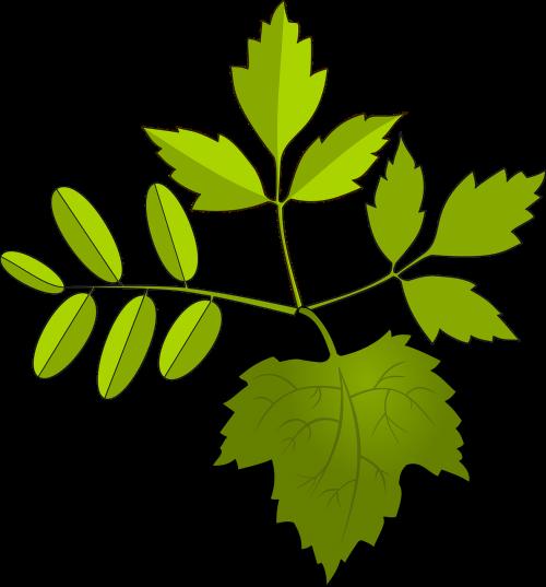 foliage green leaves