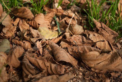 foliage autumn dry leaves