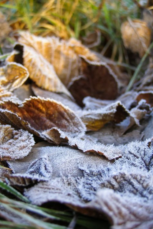 foliage ground frost frost