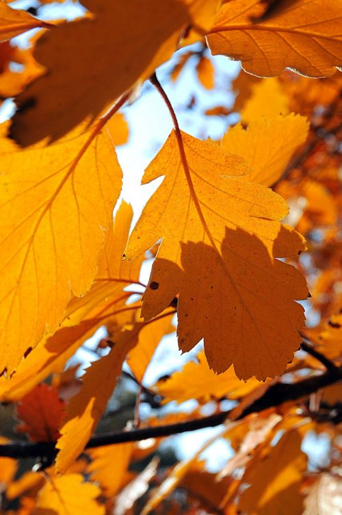 foliage autumn nature