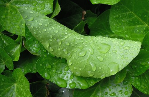 foliage green leaf raindrop