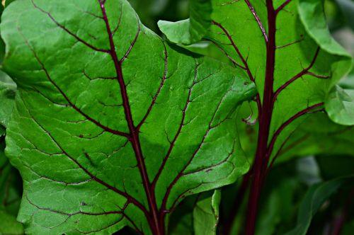foliage green green leaf
