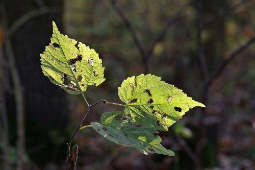 foliage broke yellow
