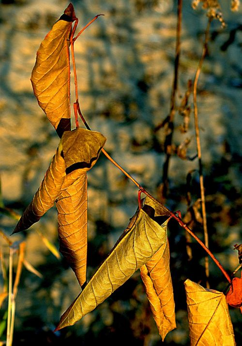 foliage dry leaves autumn