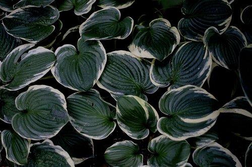 foliage  decorative  dashing
