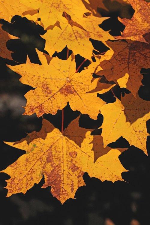 foliage  autumn  seasons of the year