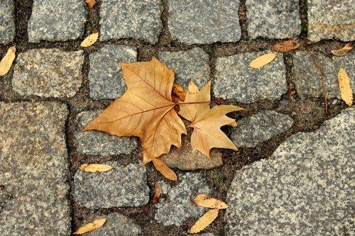 foliage  autumn  figure