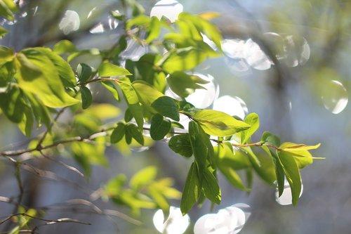 foliage  water  bokeh