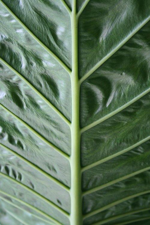 foliage  great letter  grain