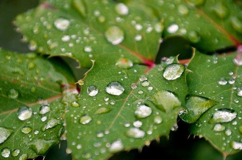 foliage  rain  raindrop