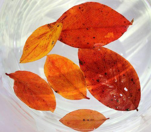 foliage autumn yellow leaves