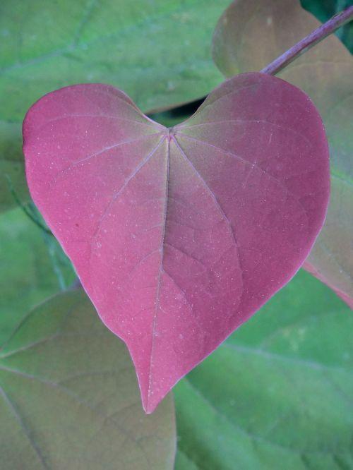 foliage leaf nature
