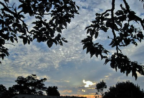 dangus, per naktį, debesys, saulėlydis, filialai, lapija, lapija ir per debesis