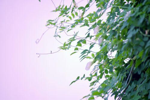 Foliage Background 11