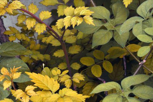 Foliage Background 13
