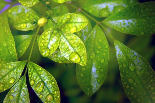 Foliage Background 9