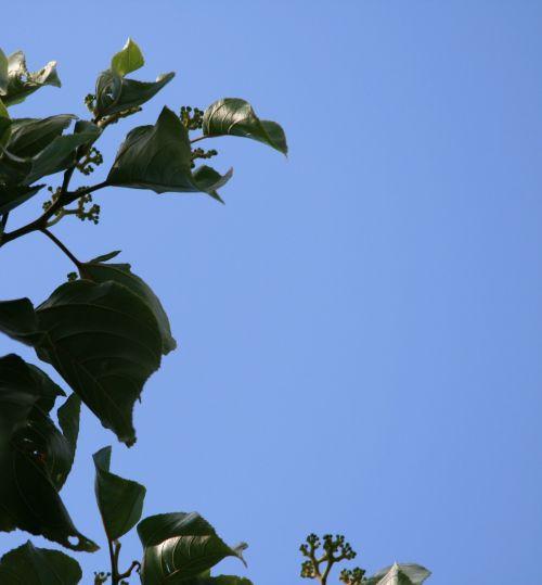 Foliage Framing Sky