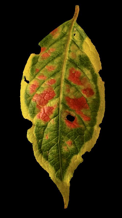 foliage leaf autumn colorful