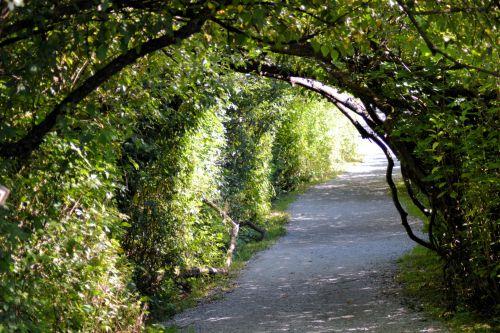 Foliage Pass 2