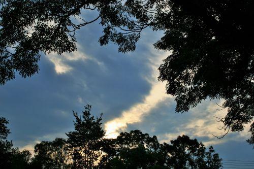 dangus, debesis, balta, aukštas, lapija, lapų siluetas & amp, šviesos debesis