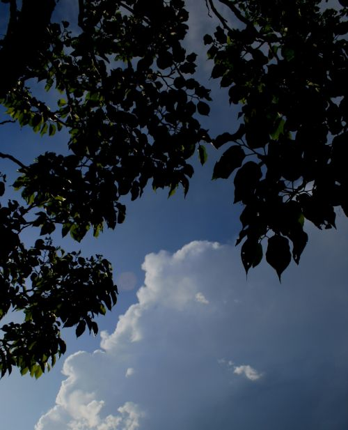 Foliage Silhouette With Cloud