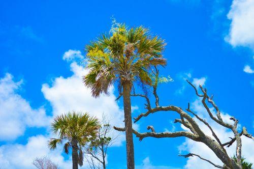 folly beach sky palm trees