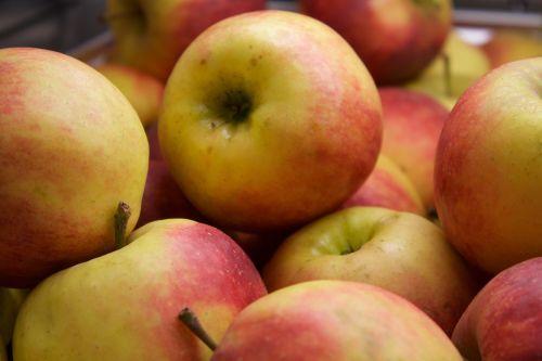 apple fruit food