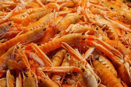 food eat seafood