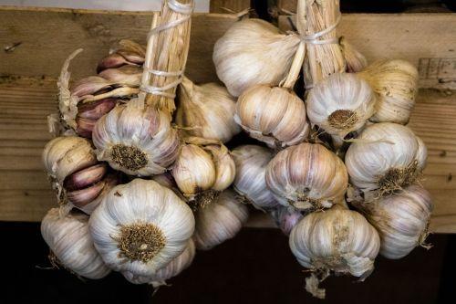 food garlic vegetable