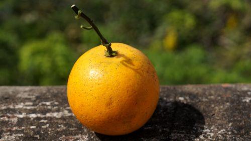 food orange yellow cam vinh