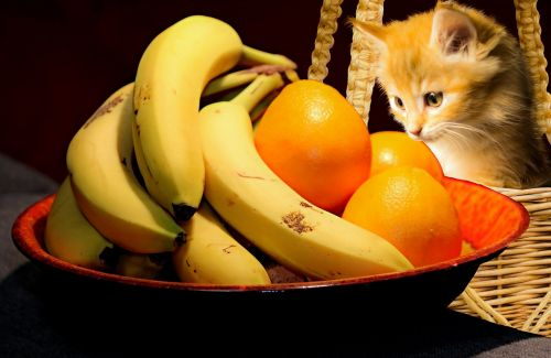 food fruit cat