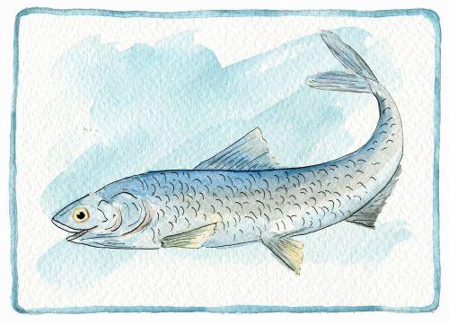 food fish boqueron