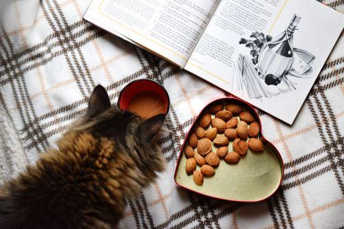 food flat lay morning coffee breakfast