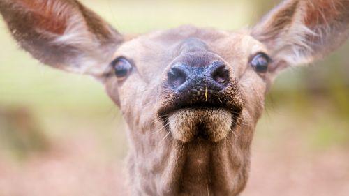foot snout nostrils
