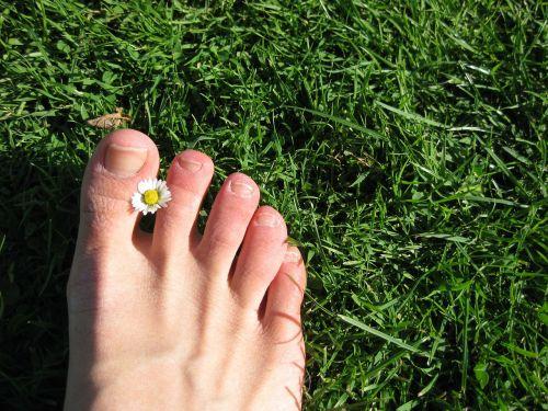 foot meadow grass